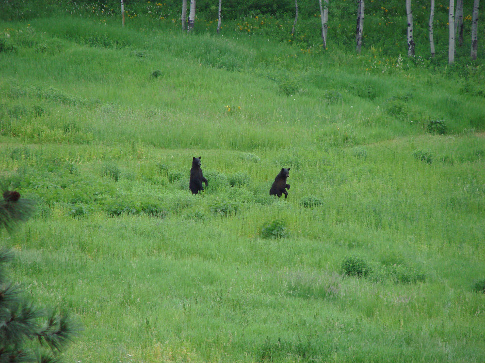 Bears+In+Meadow+1.jpg