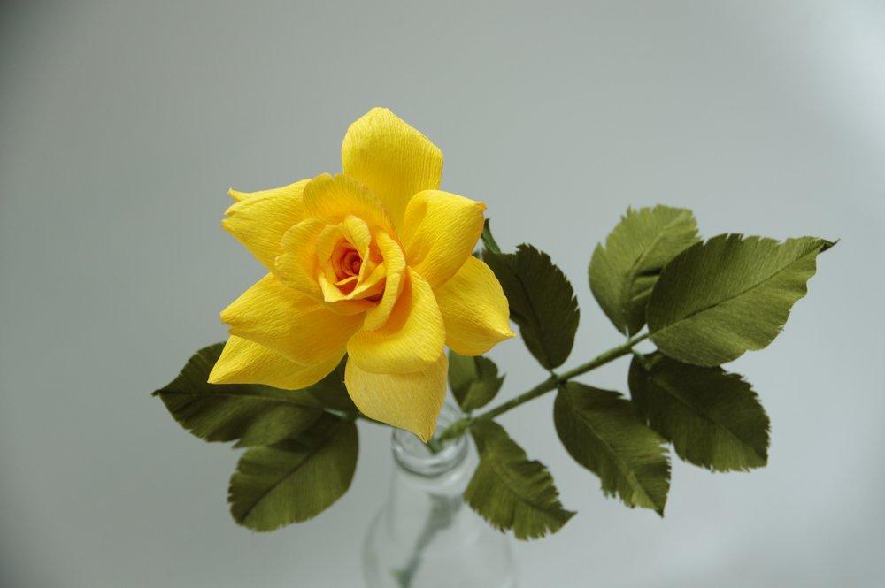 yellow_rose_bloom(4).jpg