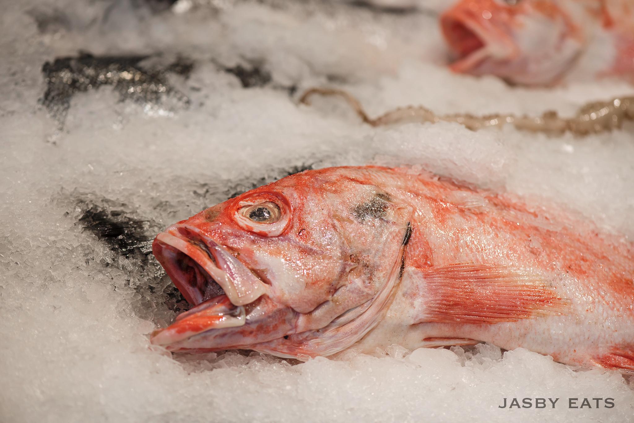 rockfish-1blogo
