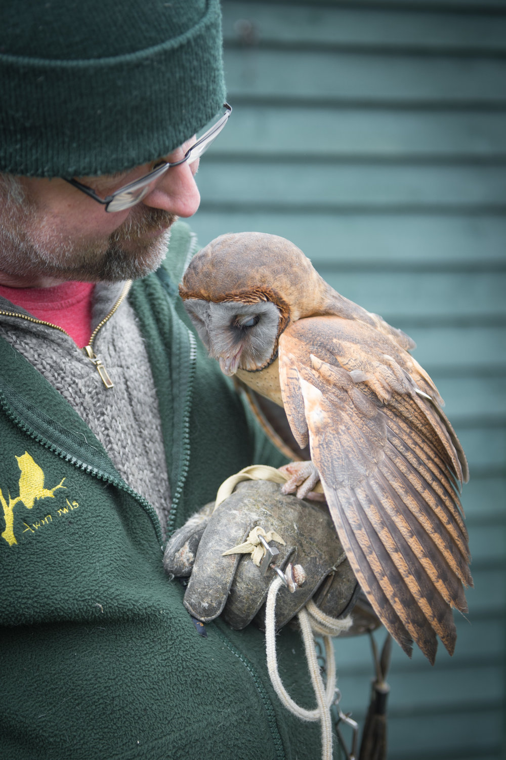 DARREN AND HARRY barn owl
