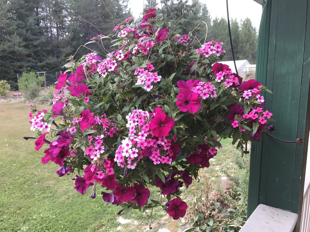 Hanging Basket from 2017