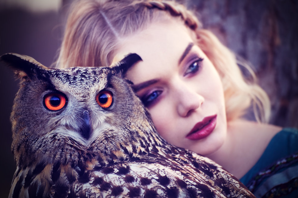 owl-i-need-is-love.jpg