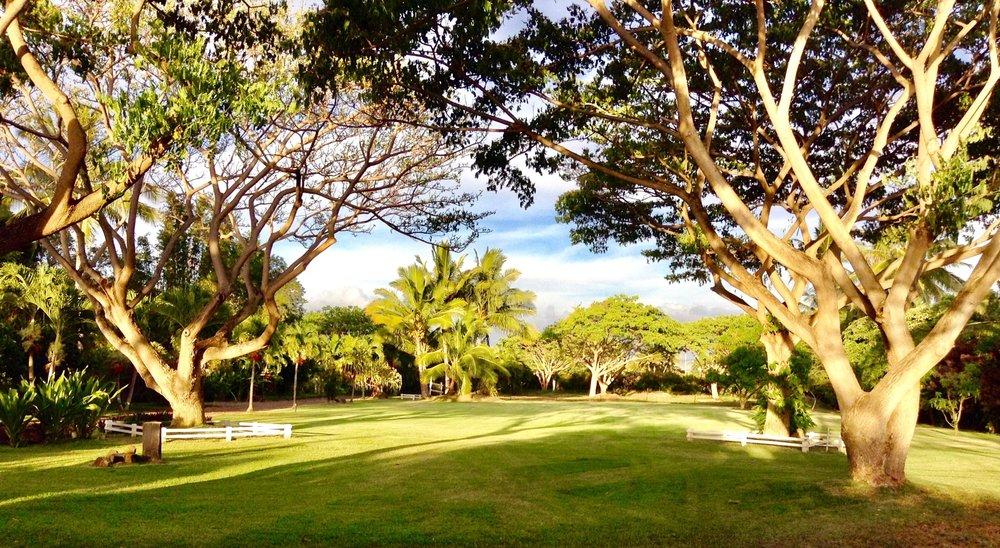 Great Lawn Vista-min.jpg