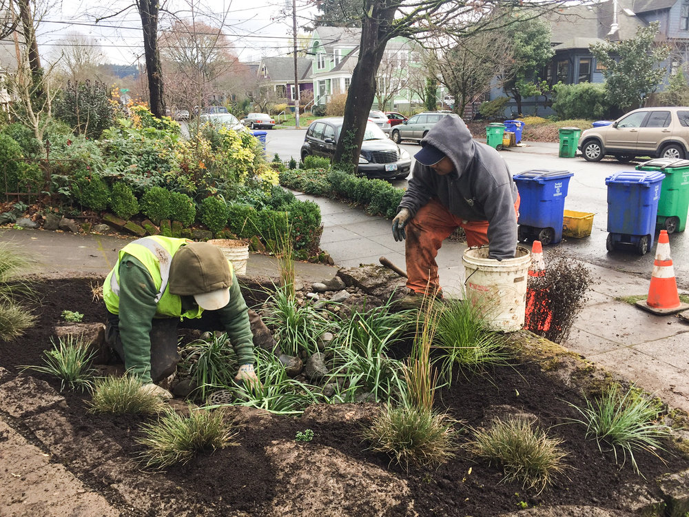Crew members Abel and Federico install a rain garden at home in SW Portland.