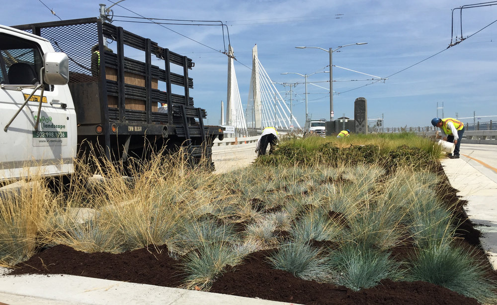 Verde Landscape provides maintenance for the green features of the Tilikum Bridge.
