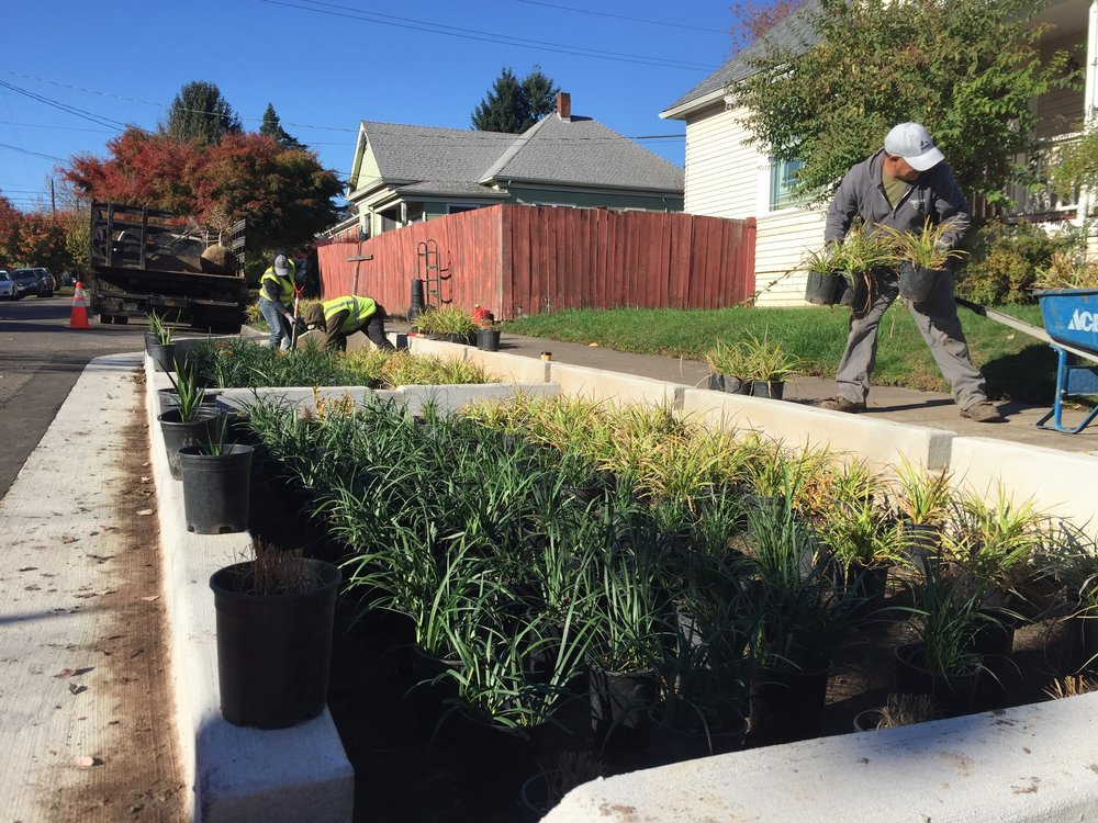 Past Verde Landscape crew members Manuela and Fedrico install plants in the 72nd Green Street bioswales.