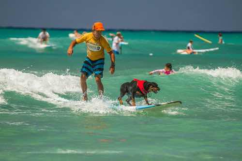 IMG_9784+Dogs+Surf+2016.jpg