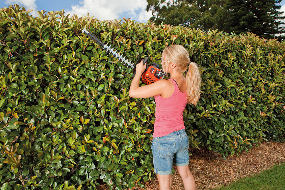 Hedgetrimmer_female_3.jpg