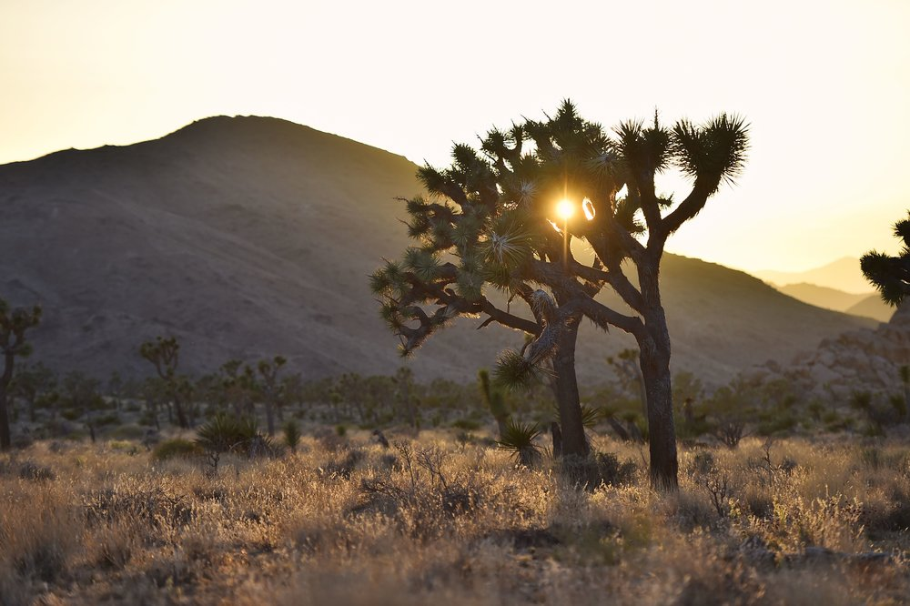 Warmth - Joshua Tree, CA