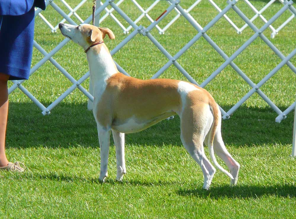 Best of Breed: Ch. Summit Lucy in the Sky