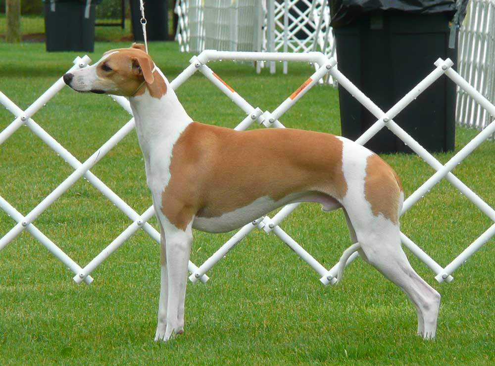 Reserve Winners Dog: Lost Creek Vendage