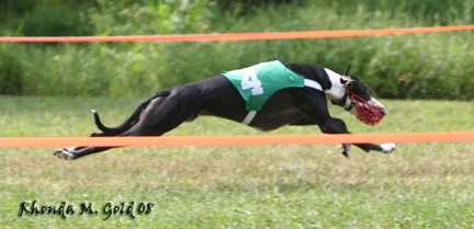 Tiercel racing at the CWA National in Nottingham, PA, August 2008