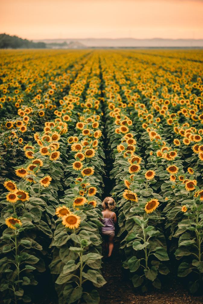 girlwalkingintoasunflowerfield.jpg