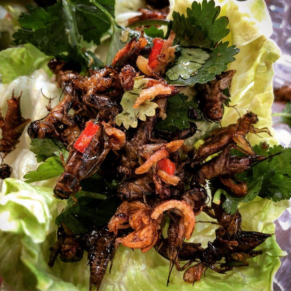 cricket san choy bau