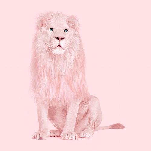 ALBINO+LION.jpg