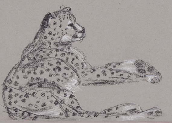 cheetah_cl