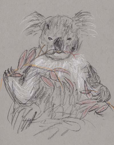 koala eating gumleaves
