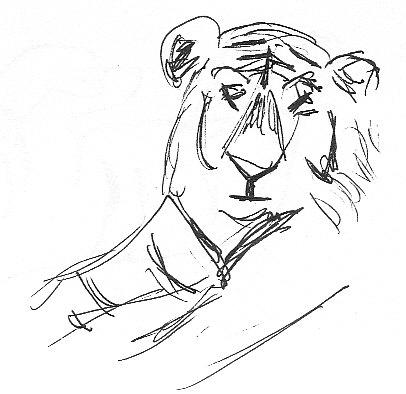 quizzical tiger