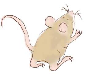 mouse01.jpg