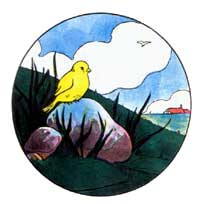 yellow bird sitting on a rock