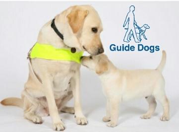 guide dogs_20180219200319932.jpg