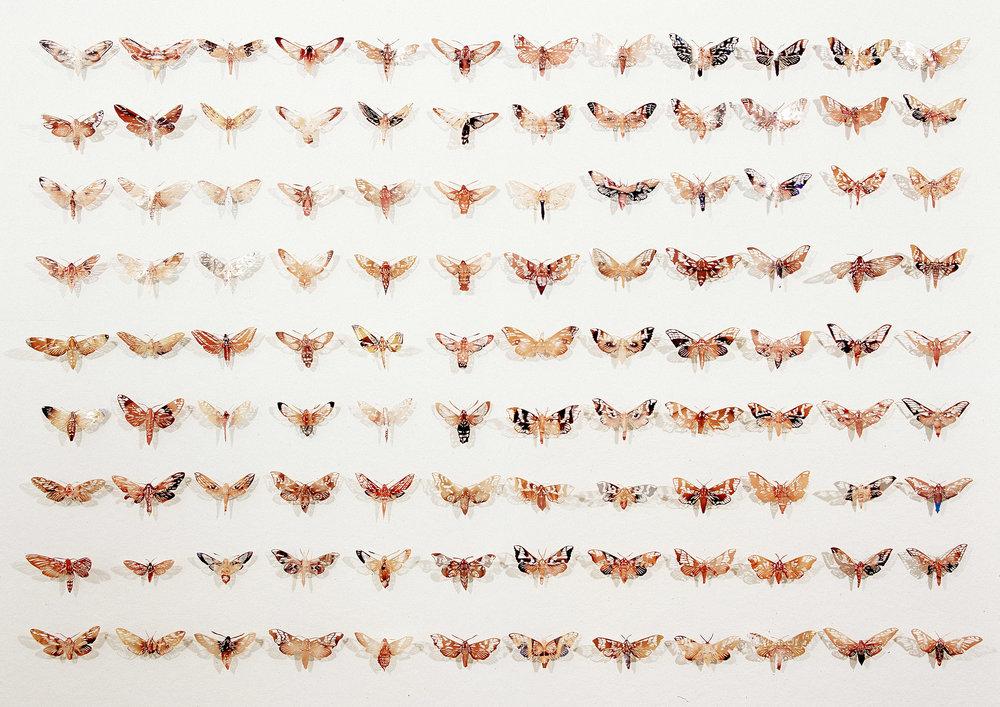 108 Moths, 2004