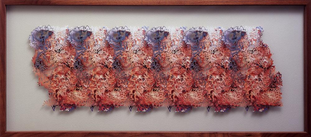 chrysanthemum, 2005