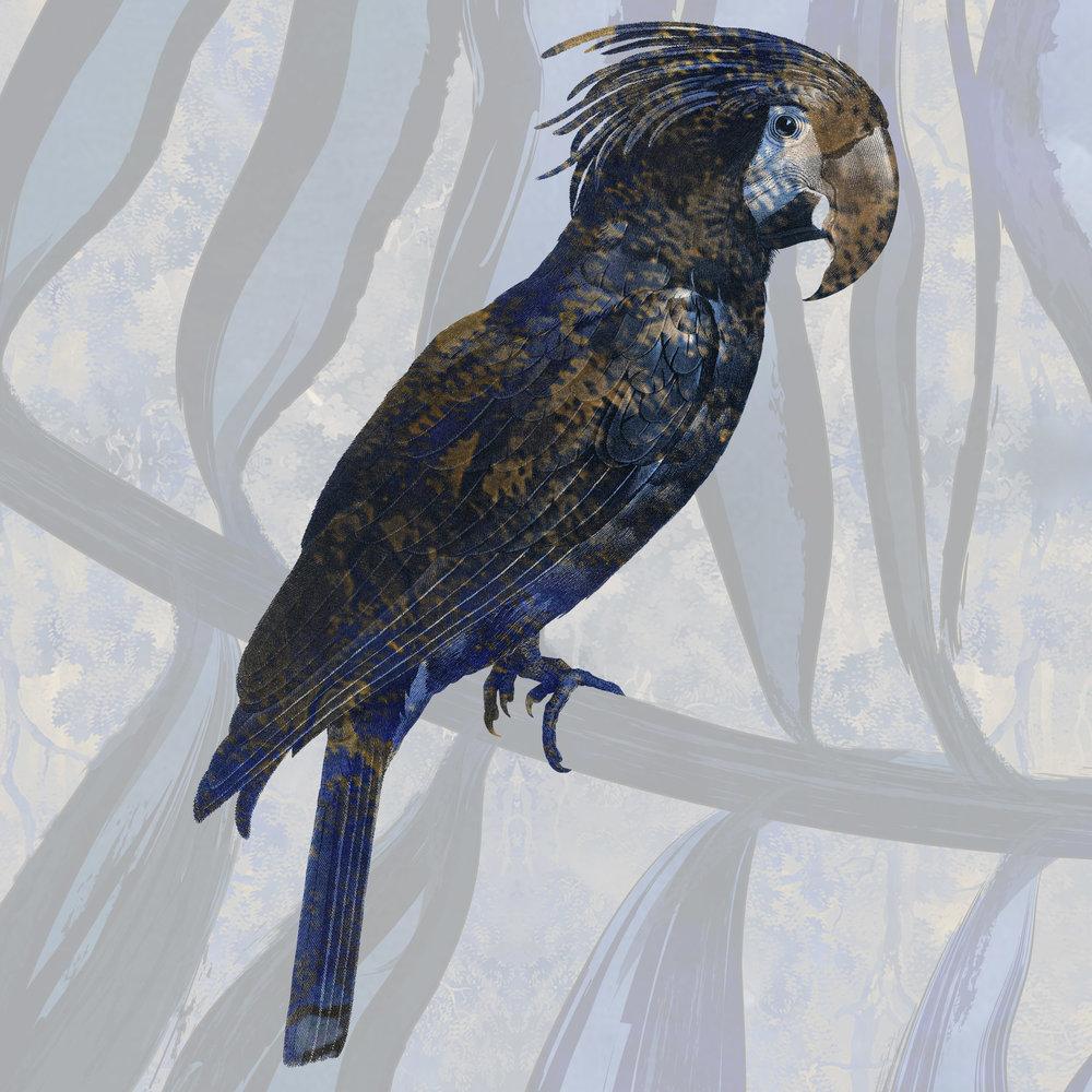 Parrot4.jpg