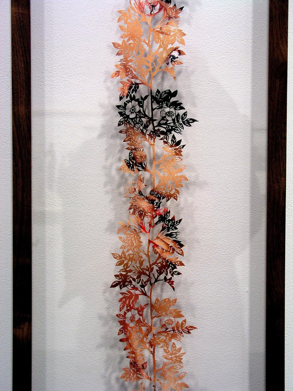 climbing rose, 2004