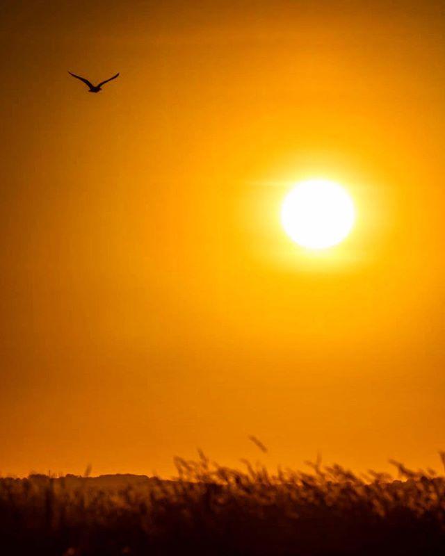 Hakuna Matata ☀️ • • • • • • • • • • • • • • • • #sunset #sundayfunday #wildlifephotography #inspireland_ #instadaily #ireland #instaireland #irishpassion #travelphotography #lambay #camping #naturephotography #landscape_lover #travelholic #sunset_lovers #goldenhour #travelguide #summer #potd #ireland_gram #loveireland #filmphotography ☘️