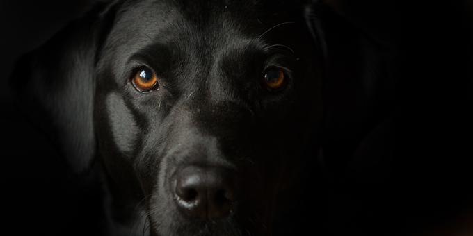National-Black-Dog-Day.jpg