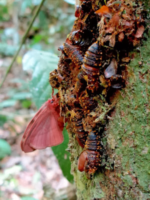 http://www.scientificamerican.com/article.cfm?id=caterpillar-butterfly-metamorphosis-explainer