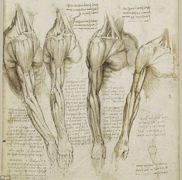 Anatomical drawing Leonardo da Vinci (1543)