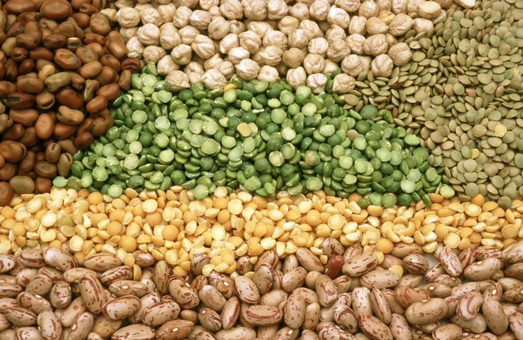 the paleo diet advises against eating legumes