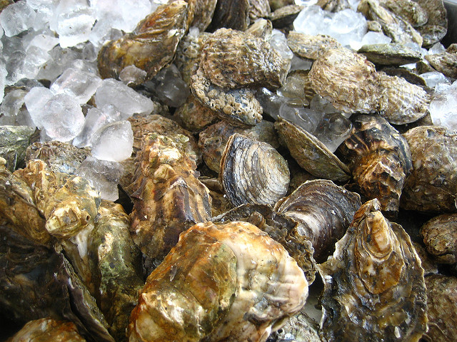 Oysters can actually clean the water where they are farmed