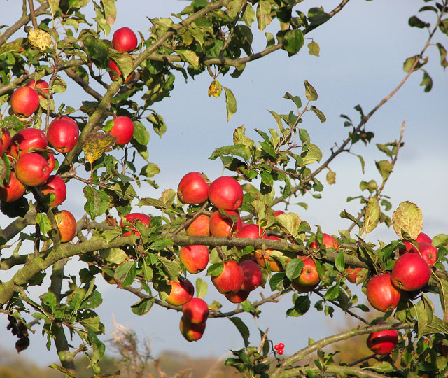 british apples will protect our farmland
