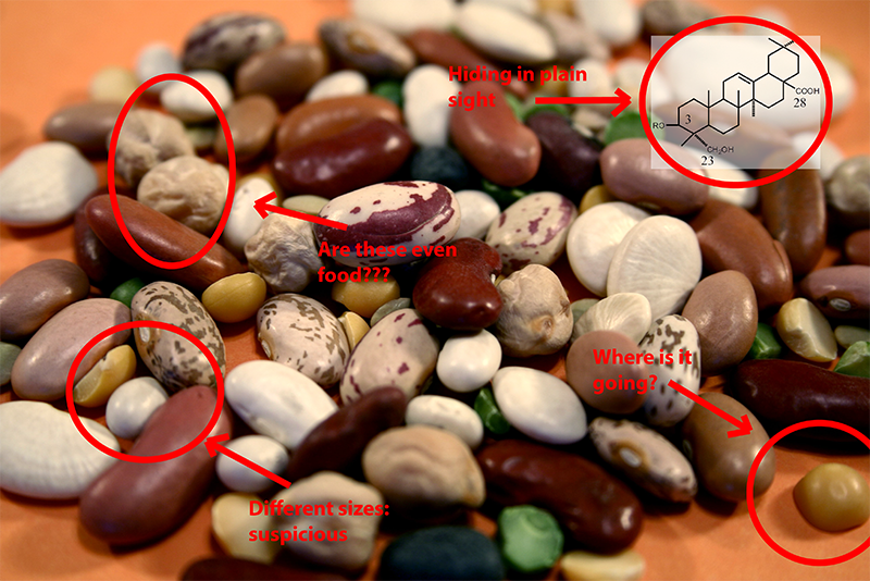 beans are full of important chemicals you've never heard of