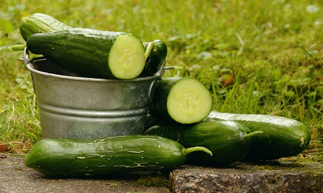 cucumbers have a very high water content