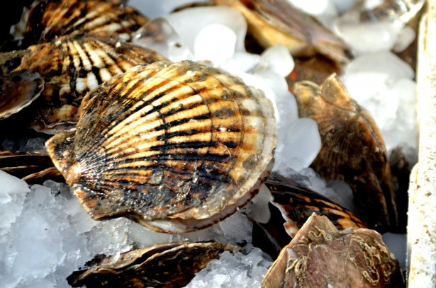 iodine in shellfish boosts metabolism and helps us burn fat