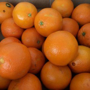 Oranges-300x300.jpg