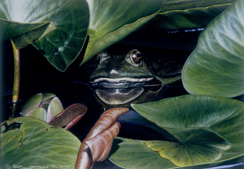 Big Frog in a Little Pond.jpg