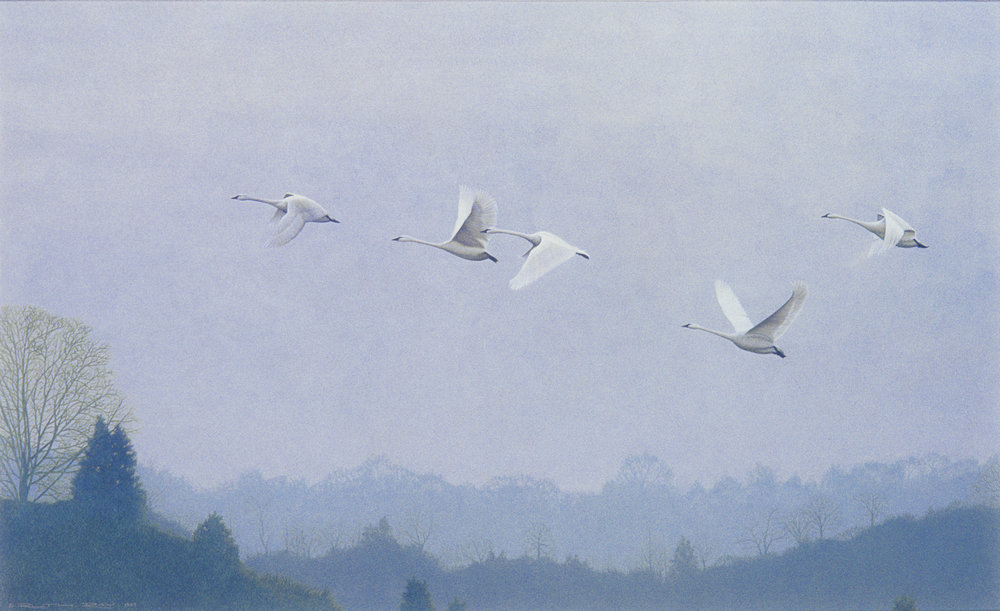 Phantoms - Whistling Swans28