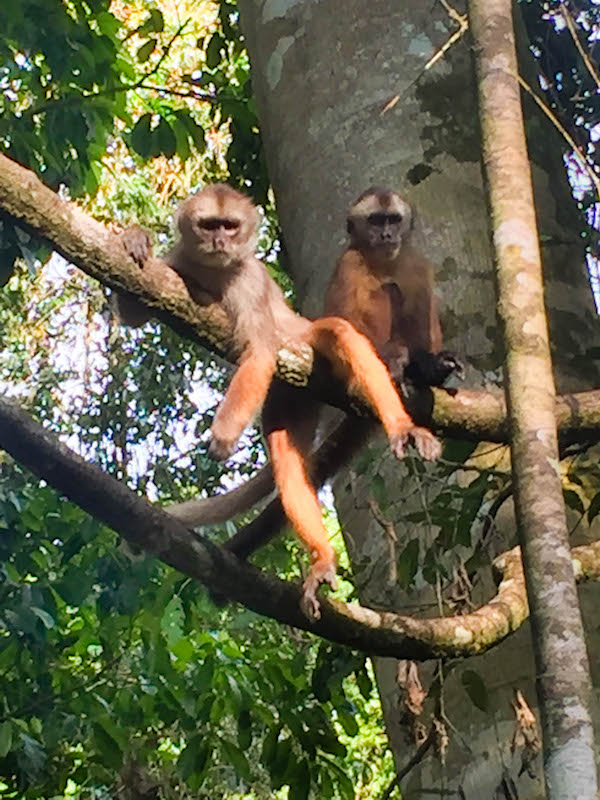 Monkeys of Monkey Island