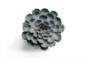 unique succulent plant in black and white