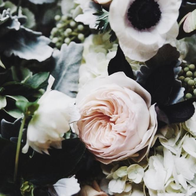 WIldblume_Imagery_Grow