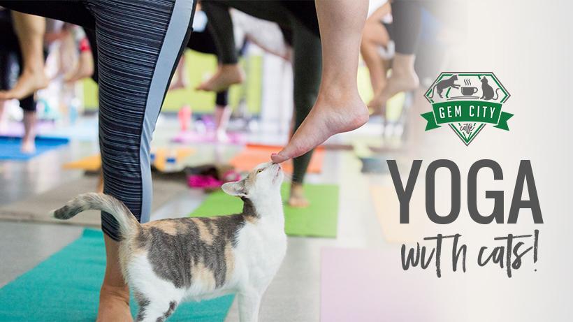 10_10_18_yogawithcats.jpg