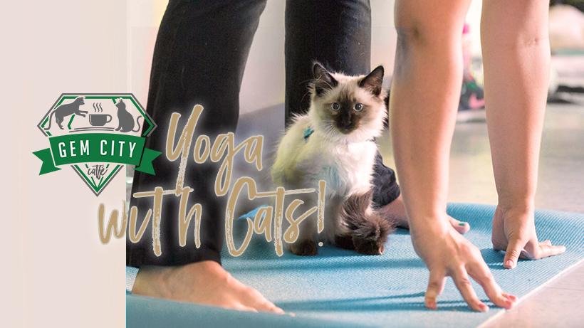 10.18.18_yogawithcatsnov_cover.jpg