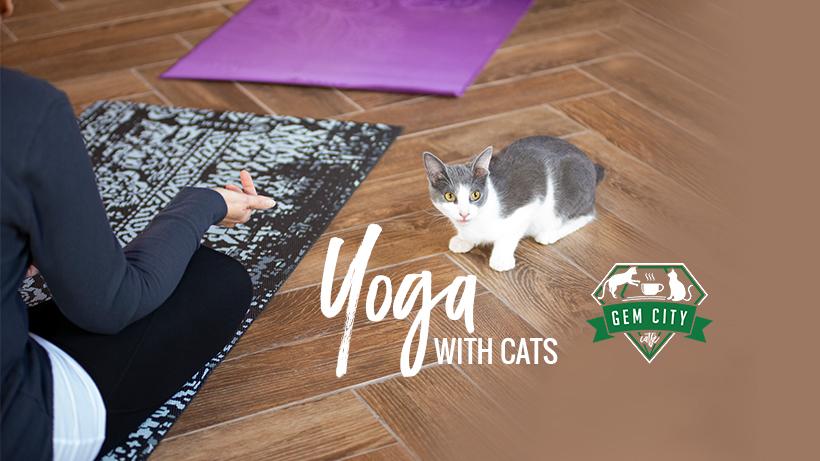 11.18.18_yogawithcats.jpg