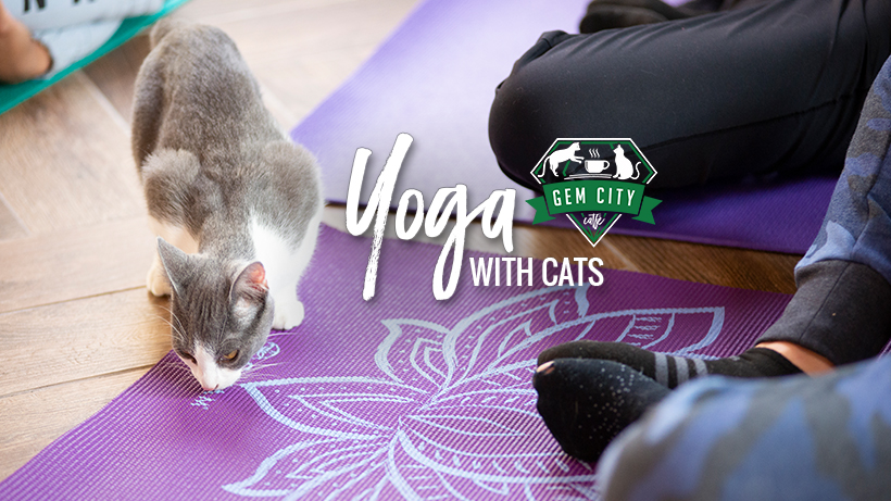 1.24.19_yogawithcats_cover.jpg