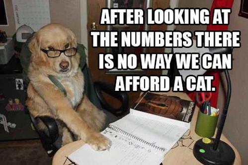 Accountant-Dog.jpg